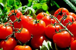 Domácí rajčata